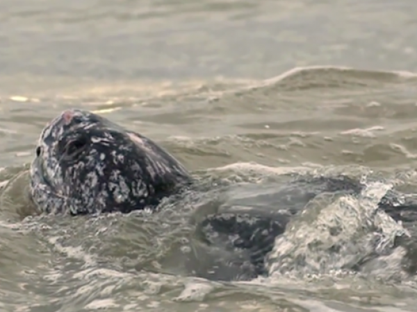 Pacific Leatherback Protection