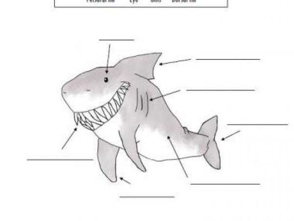 Shark Anatomy Label Worksheet + powerpoint