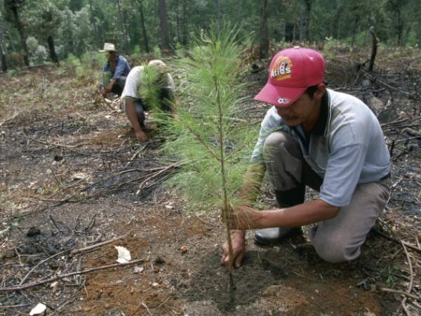 Reforestation: Impact on Climate