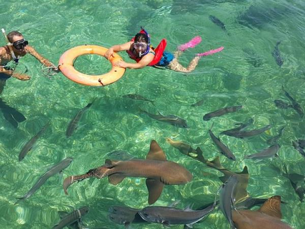 Saving sharks and Rays - Belize