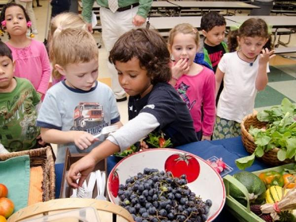 Health, Nutrition and Wellness Strategies for Your School and Community