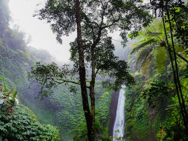 The Rainforest Symphony: Using Science and Acoustic Technology to Investigate Biodiversity