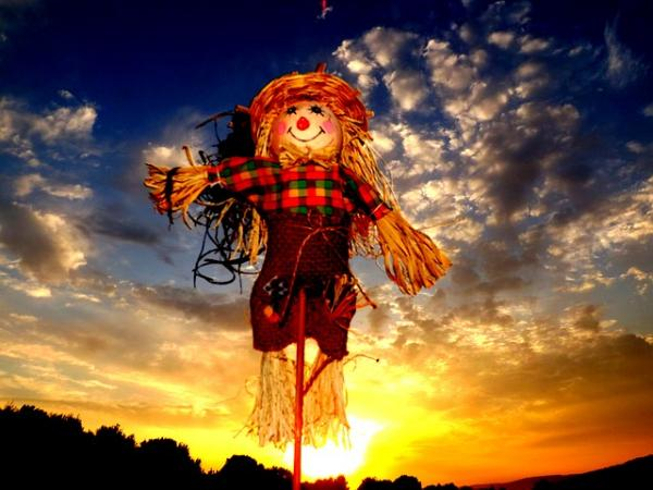 The Scarecrow is Looking for Pumpkins: Emergent Reader