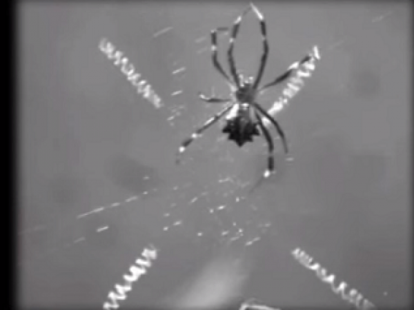 Why Spiders Don't Stick To The Web Video
